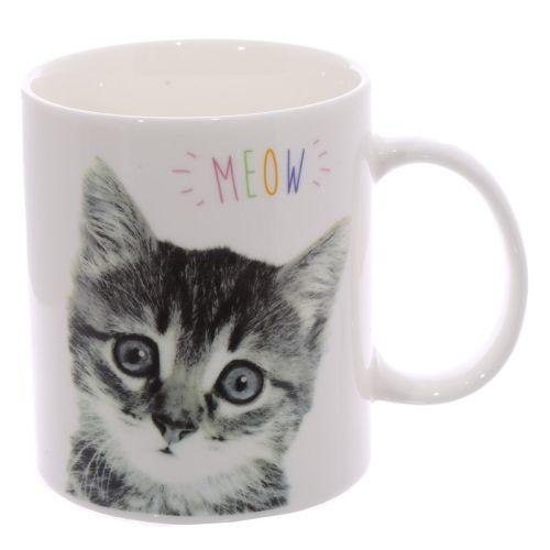 Beker kitten